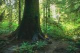 Tongass Forest